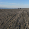 Thumbnail image for The Longest Beach
