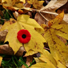 Thumbnail image for Remembrance Day in Chemainus, BC