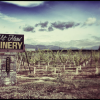 Thumbnail image for Wine Tasting 101: Tips for First-Timers