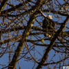 Thumbnail image for Quick Escape: See the Skagit Bald Eagles